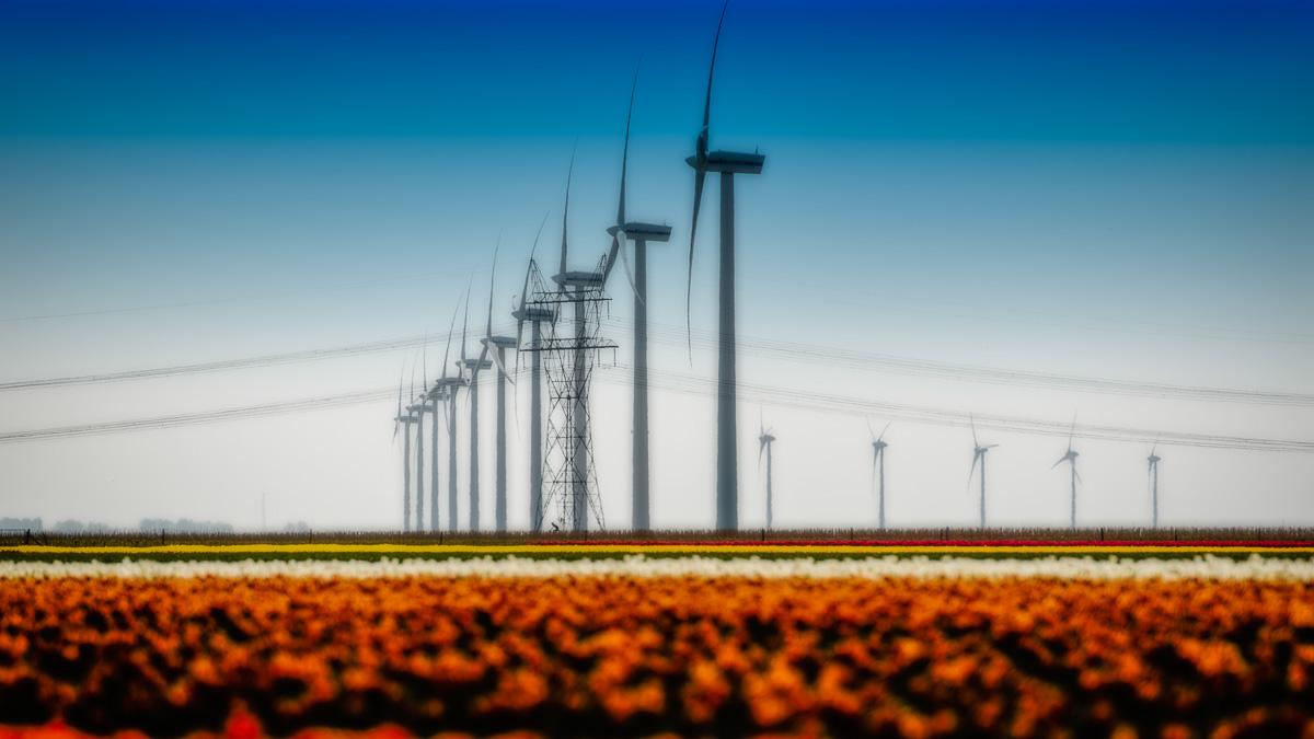 Flevoland windmolens en tulpen